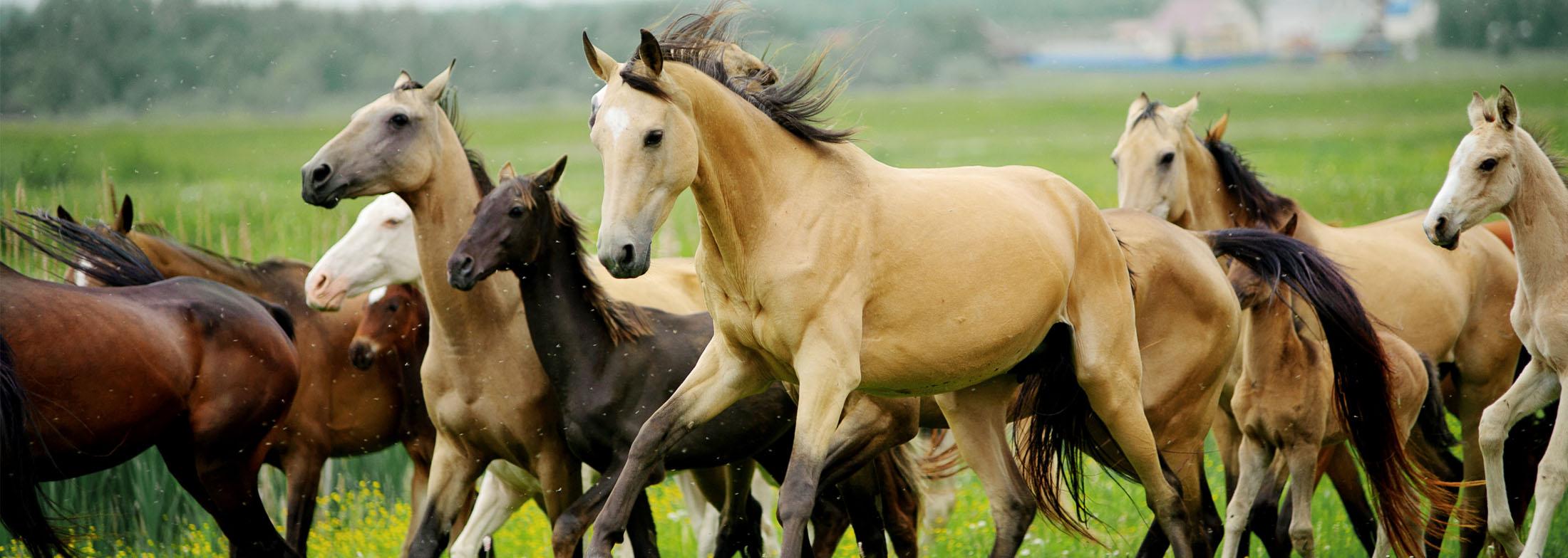 equineslider1